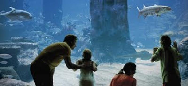 L h tel atlantis aux bahamas des activit s qui sortent de for Glissade d eau interieur